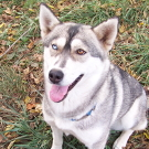 picture of Mishka (was Bandit)