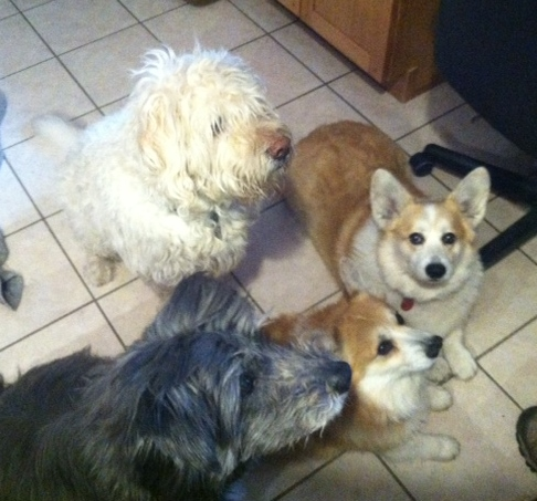 Cayuga Dog Rescue